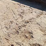 opgravingen Spijk
